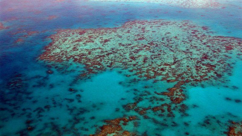 Интересные факты о Большом Барьерном рифе