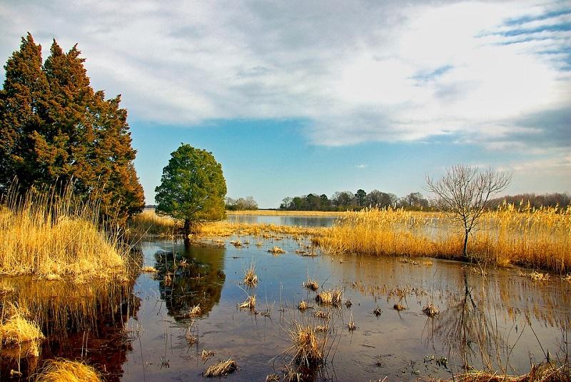 Интересные факты о болотах