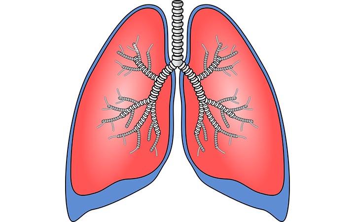 Интересные факты о дыхательной системе