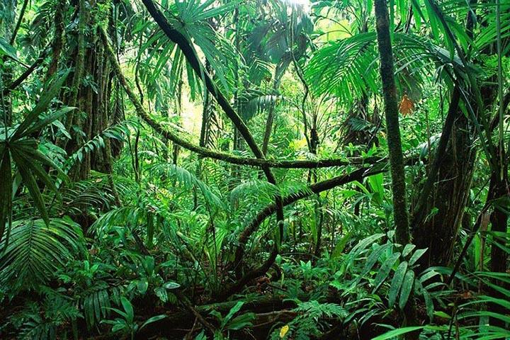 Интересные факты о джунглях