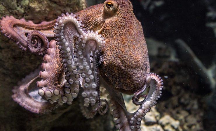 Интересные факты о головоногих моллюсках