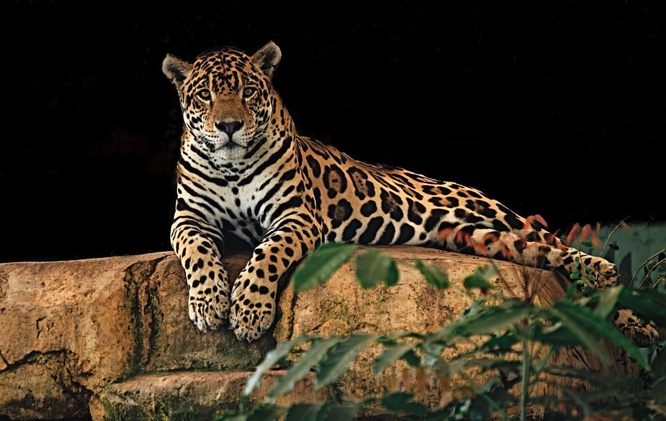 Интересные факты о хищниках