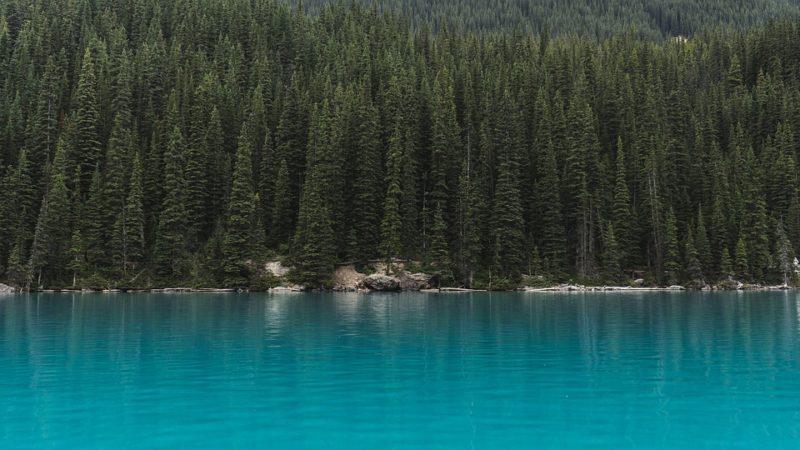Интересные факты о хвойных лесах