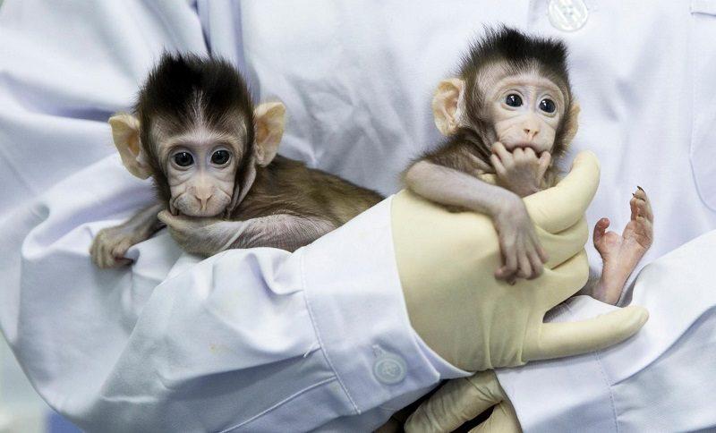 Интересные факты о клонировании