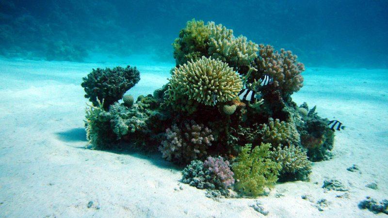 Интересные факты о кораллах