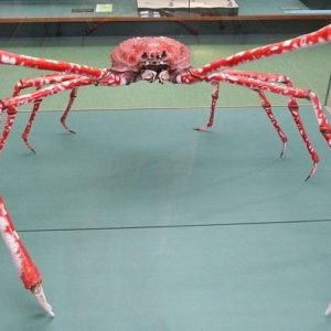 Японский краб-паук