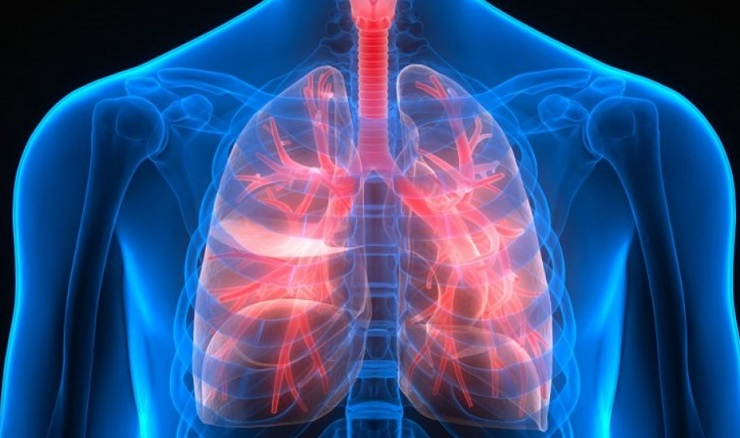 Интересные факты о лёгких человека