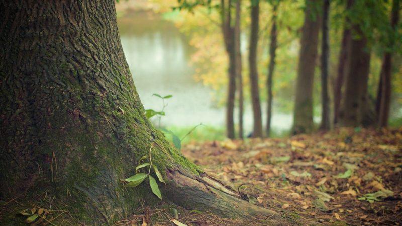 Интересные факты о лесах