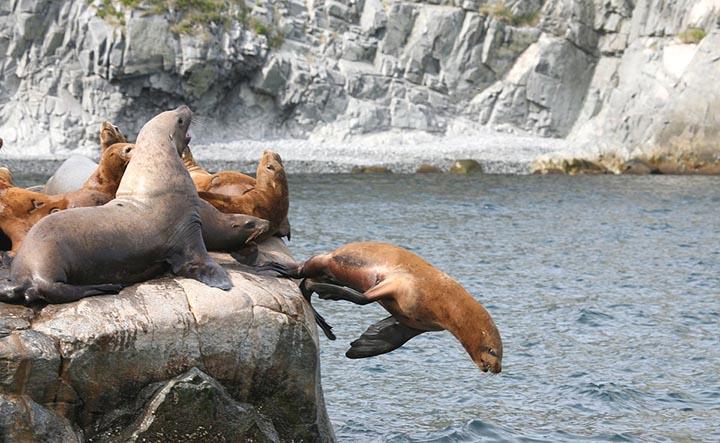 Интересные факты о морских львах