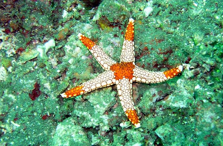 Интересные факты о морских звёздах