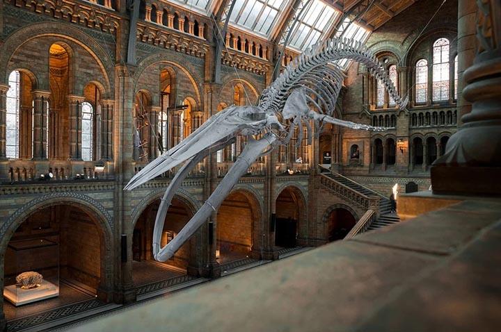 Интересные факты о музеях мира