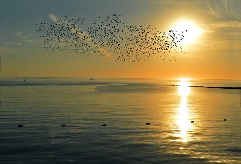 Интересные факты о перелётных птицах