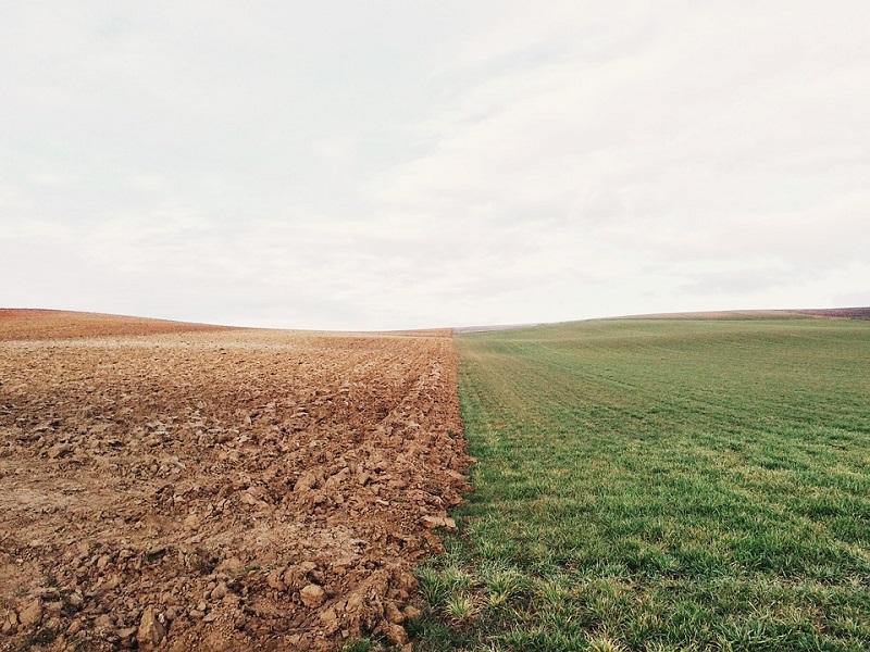 Интересные факты о почве