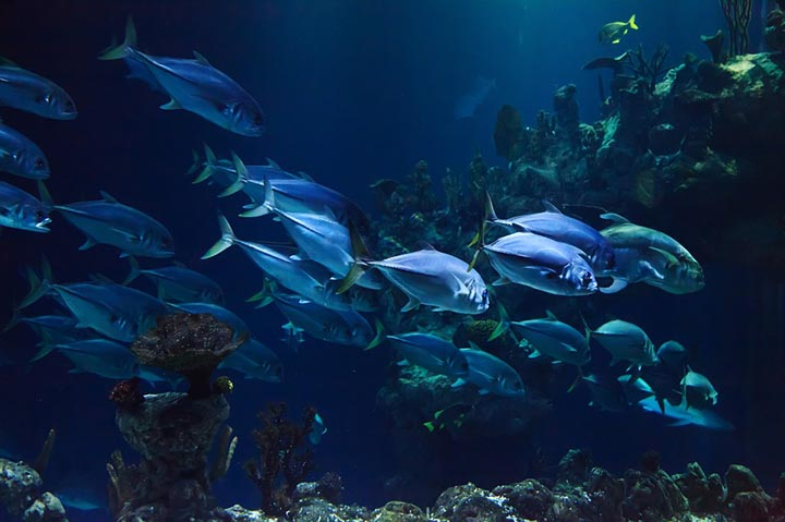 Интересные факты о подводном мире