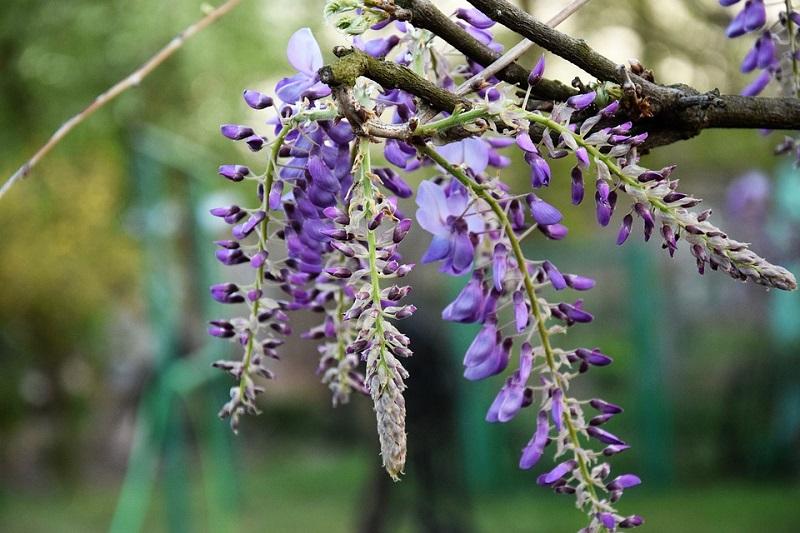 Интересные факты о покрытосеменных растениях