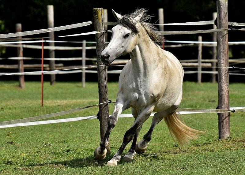 Интересные факты о пони