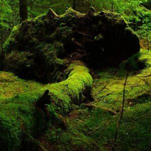 Растения лесных зон