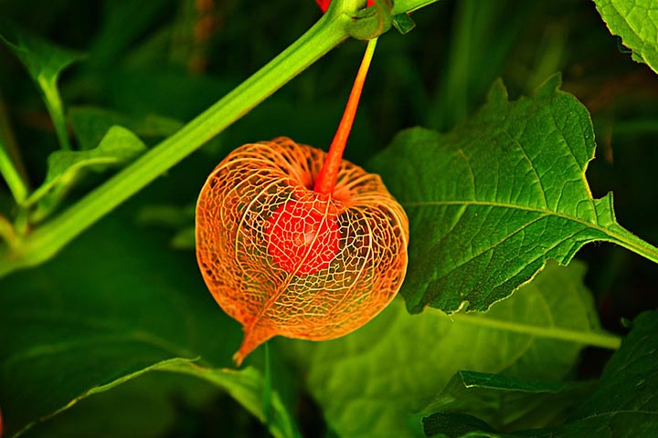 Интересные факты о растительном мире