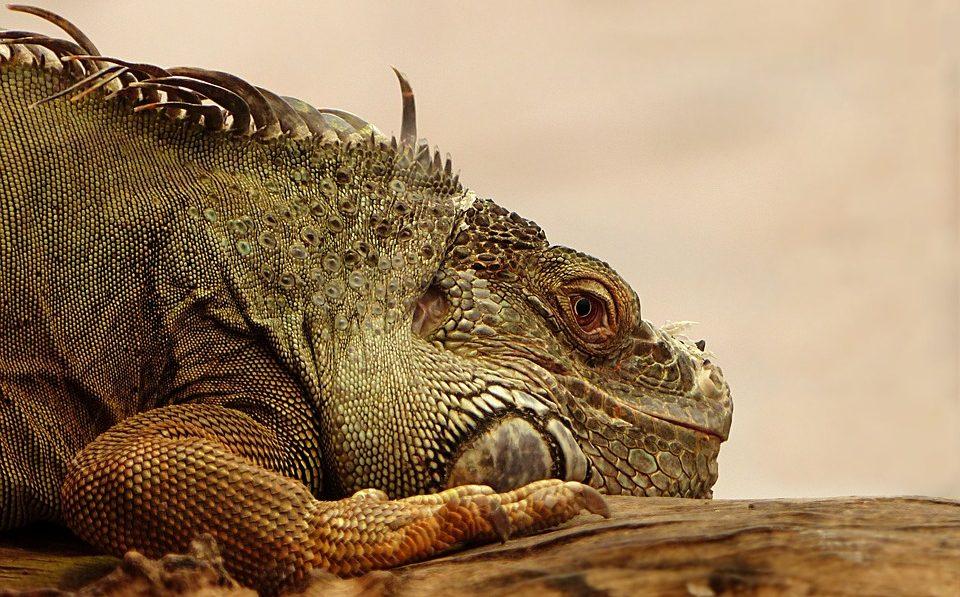 Интересные факты о рептилиях