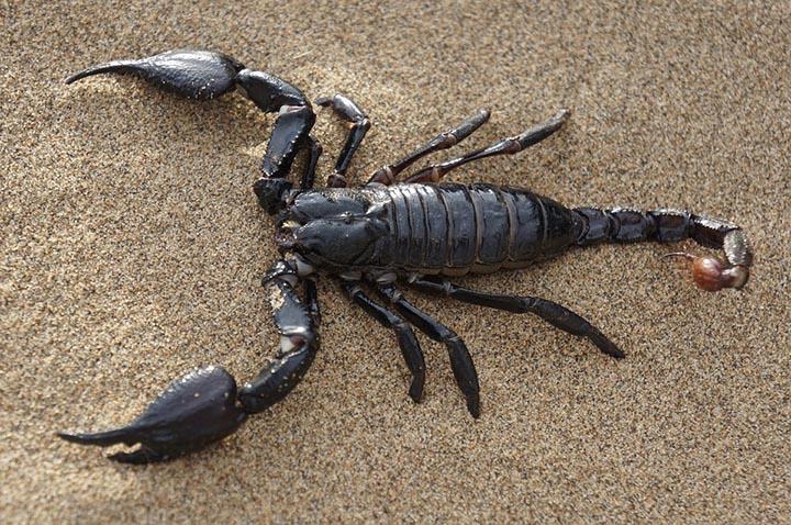 Интересные факты о скорпионах