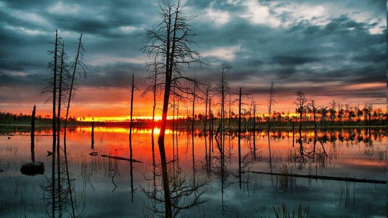 Интересные факты о Васюганских болотах