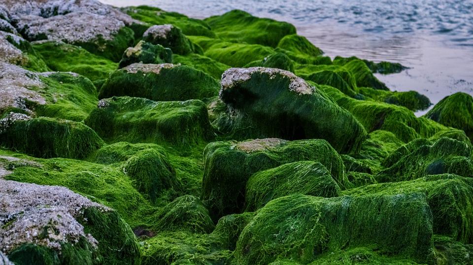 Интересные факты о водорослях