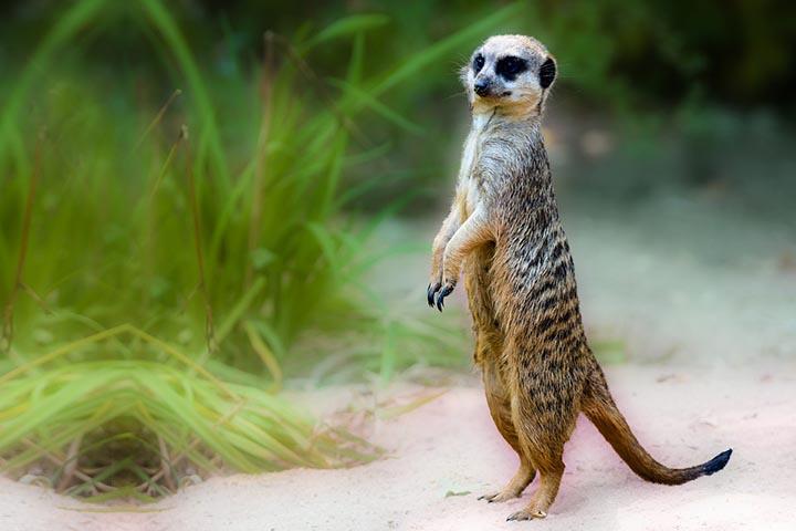 Интересные факты о животных жарких стран