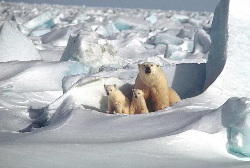 Интересные факты о животных холодных районов