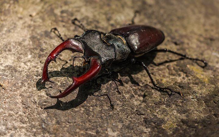 Интересные факты о жуках