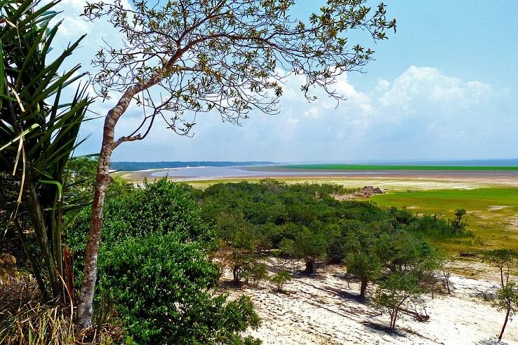 Интересные факты об Амазонской низменности