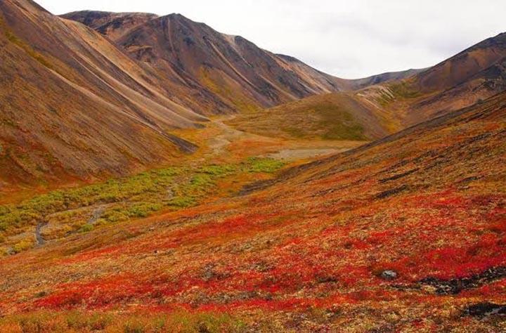 Интересные факты о Большом Арктическом заповеднике