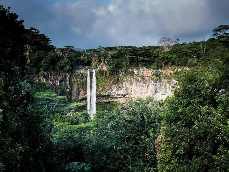 Интересные факты об экваториальных лесах