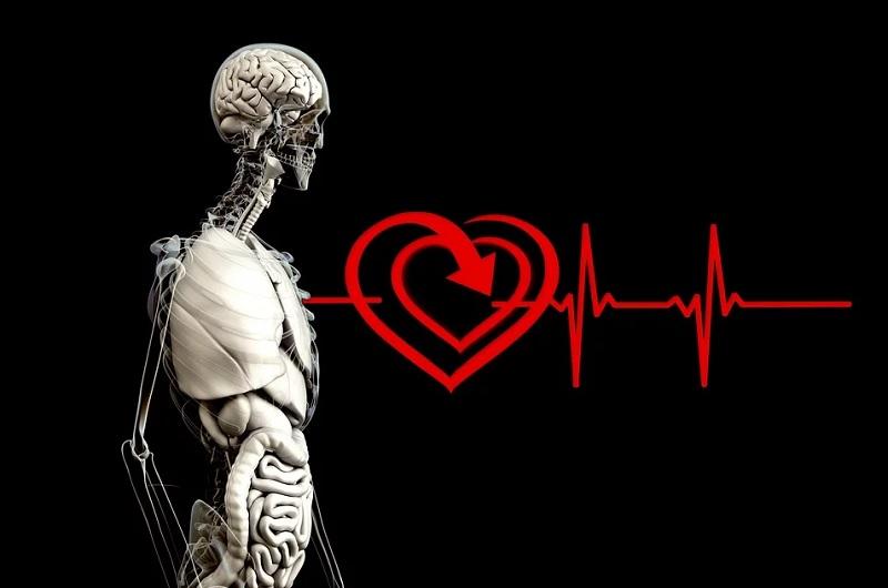 Интересные факты об органах человека